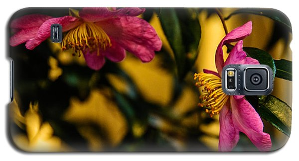 Galaxy S5 Case featuring the photograph Pink Sasanquas  by John Harding