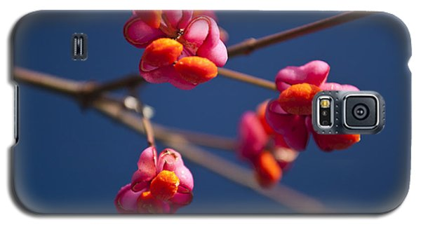Galaxy S5 Case featuring the photograph Pink Spindle Fruit by David Isaacson