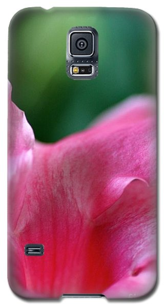 Pink To Light  Galaxy S5 Case by Cathy Dee Janes