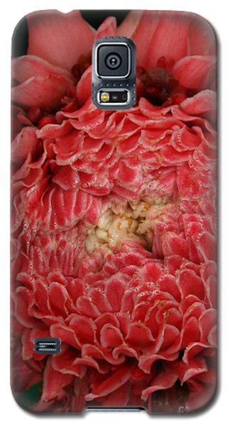 Pink Torch Ginger 1 Galaxy S5 Case