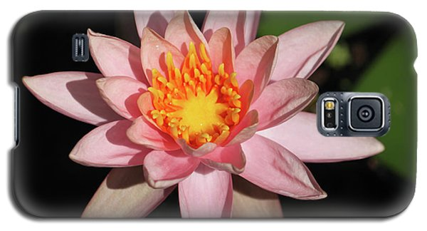 Galaxy S5 Case featuring the photograph Pink Water Lily 2016 by Suzanne Gaff