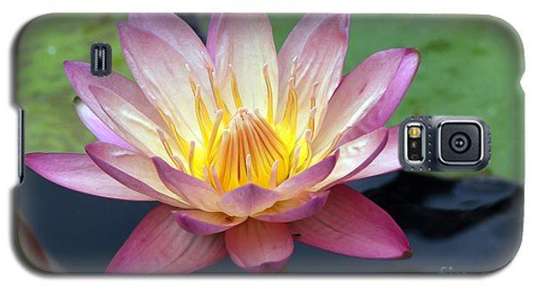 Pink Water Lily Galaxy S5 Case by Teresa Zieba