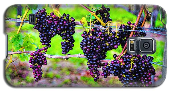 Galaxy S5 Case featuring the photograph Pinot Noir Grapes by Rick Bragan