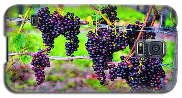 Pinot Noir Grapes Galaxy S5 Case by Rick Bragan