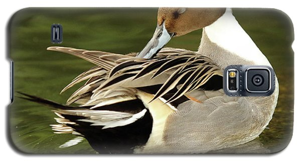 Galaxy S5 Case featuring the photograph Pintail Drake Grooming by Max Allen