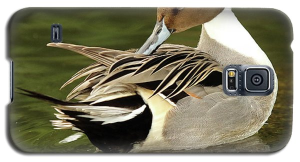 Pintail Drake Grooming Galaxy S5 Case by Max Allen