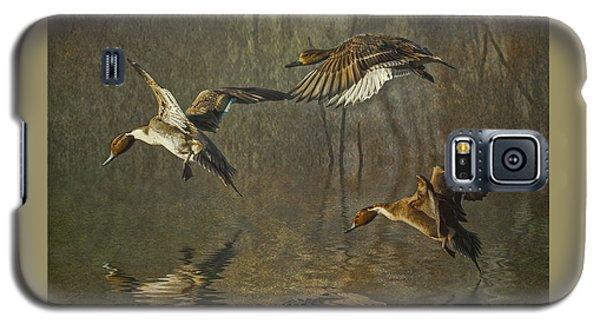 Pintail Ducks Galaxy S5 Case by Brian Tarr