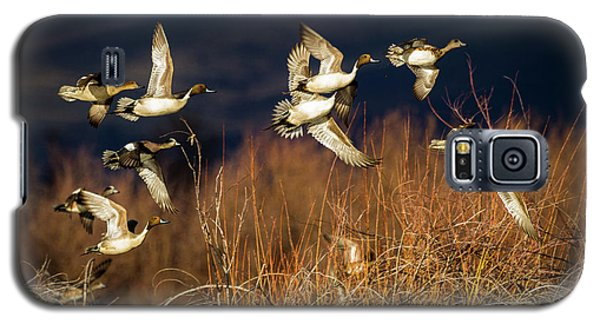 Pintails And Wigeons Galaxy S5 Case