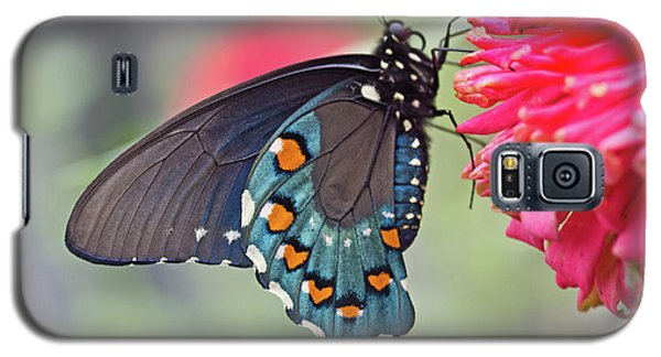 Pipevine Swallowtail Butterfly Galaxy S5 Case