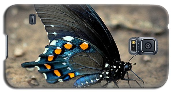 Pipevine Swallowtail Close-up Galaxy S5 Case