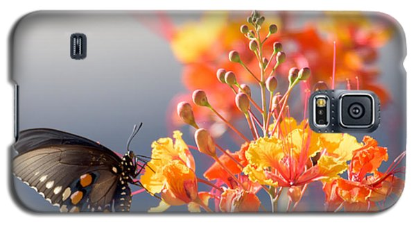 Galaxy S5 Case featuring the photograph Pipevine Swallowtail by Dan McManus