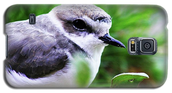 Galaxy S5 Case featuring the photograph Piping Plover by Anthony Jones