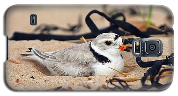 Piping Plover Galaxy S5 Case
