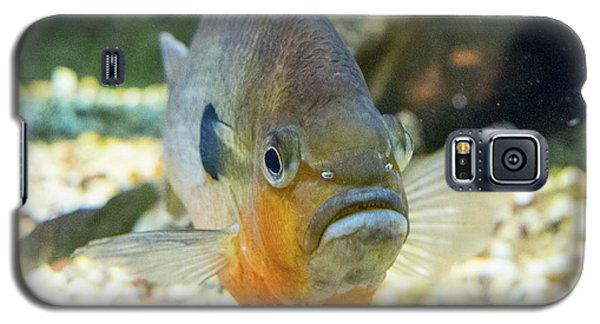Piranha Behind Glass Galaxy S5 Case