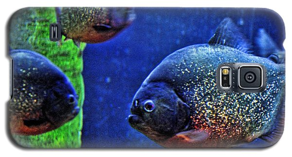 Galaxy S5 Case featuring the photograph Piranha Blue by Jan Amiss Photography