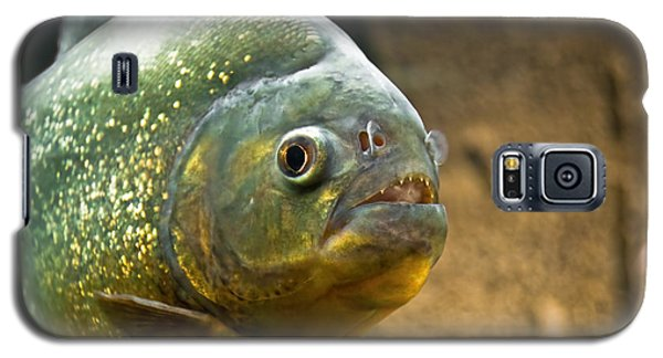 Galaxy S5 Case featuring the photograph Piranha by Yurix Sardinelly