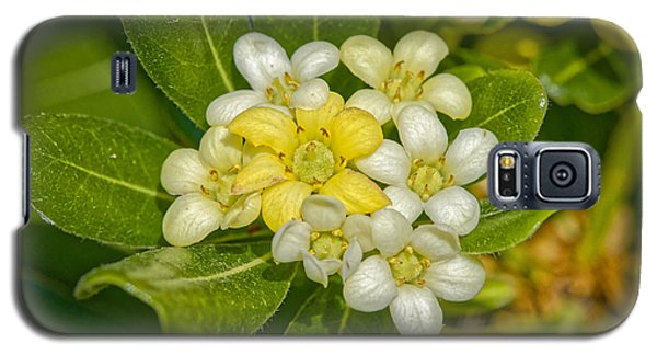 Pittosporum Flowers Galaxy S5 Case
