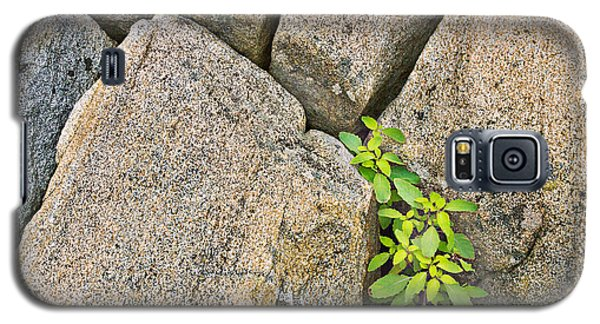 Plant In Granite Crevice Abstract Galaxy S5 Case