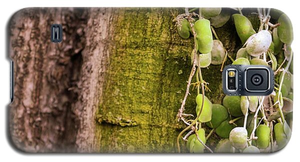 Plants And Trees Hawaii 522 Galaxy S5 Case