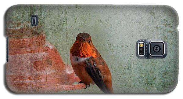 Plate 164 - Hummingbird Grunge Series Galaxy S5 Case