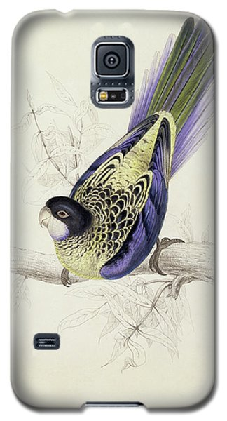 Platycercus Brownii, Or Browns Parakeet Galaxy S5 Case