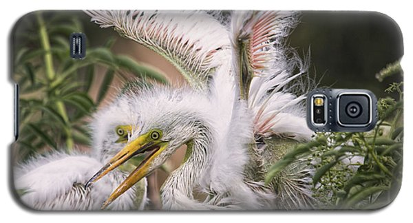 Playful Egret Chicks Galaxy S5 Case