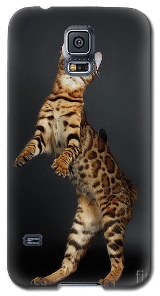 Playful Female Bengal Cat Stands On Rear Legs Galaxy S5 Case by Sergey Taran