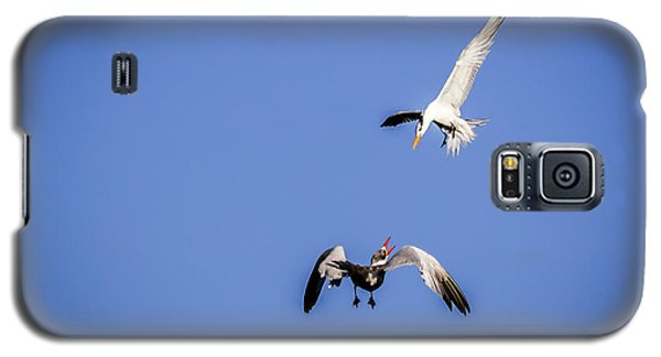 Playing Terns Galaxy S5 Case