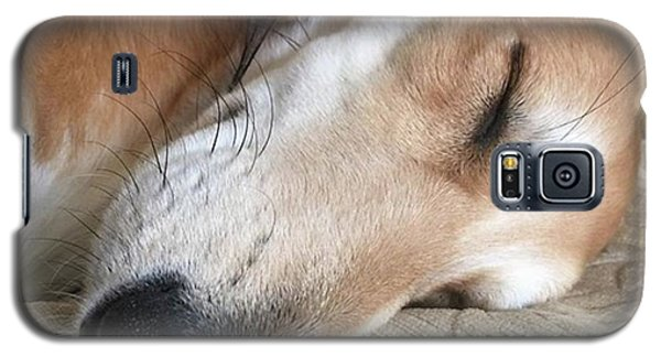 Please Be Quiet. Saluki Galaxy S5 Case