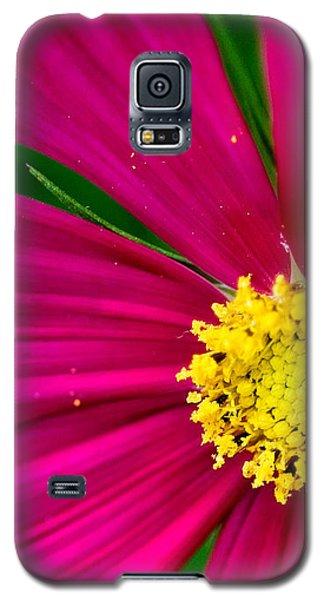 Plink Flower Closeup Galaxy S5 Case