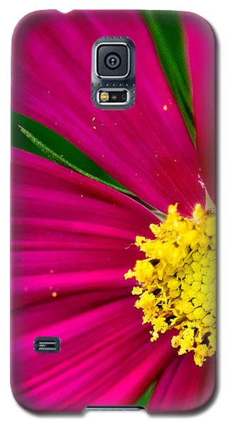 Plink Flower Closeup Galaxy S5 Case by Michael Bessler