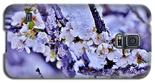 Plum Blossoms In Snow Galaxy S5 Case