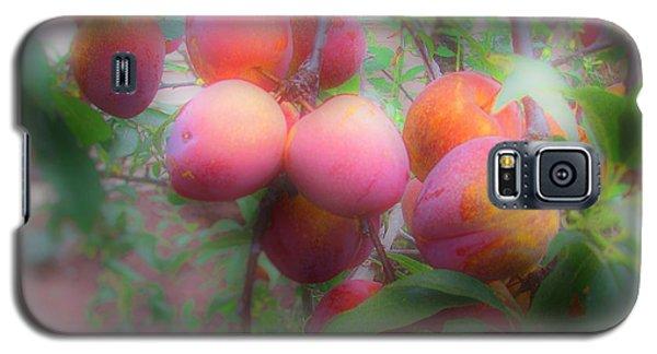 Plum Delight Galaxy S5 Case