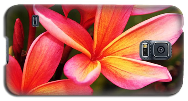 Plumeria - Pretty Pink Galaxy S5 Case