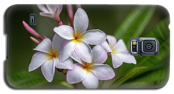 Plumeria 1 Galaxy S5 Case