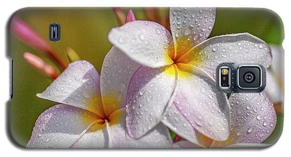 Plumeria 2 Galaxy S5 Case
