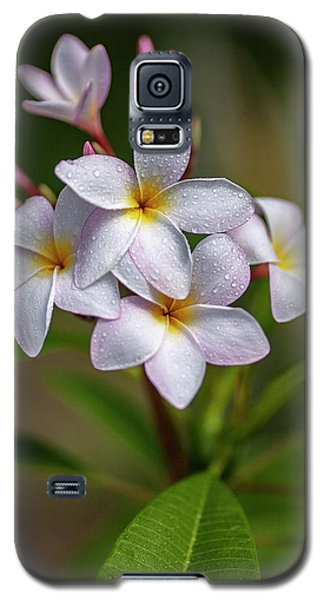 Plumeria 3 Galaxy S5 Case
