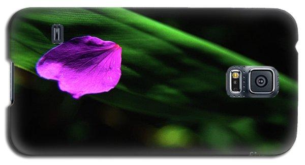 Plumeria Flower Petal On Plumeria Leaf- Kauai- Hawaii Galaxy S5 Case