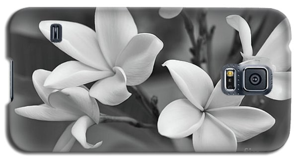 Plumeria Flowers Galaxy S5 Case by Olga Hamilton