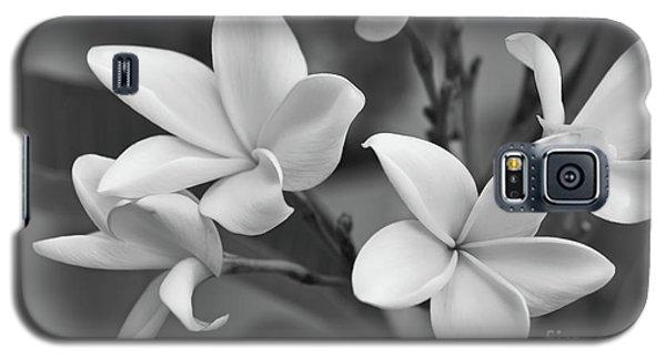Plumeria Flowers Galaxy S5 Case