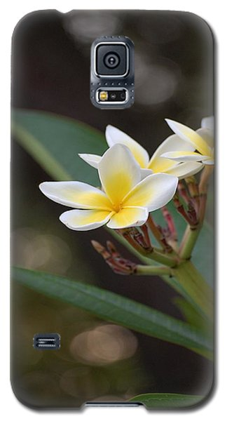 Plumeria II Galaxy S5 Case by Robert Meanor
