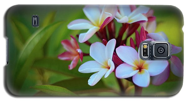 Galaxy S5 Case featuring the photograph Plumeria Sunset by Kelly Wade