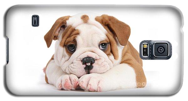 Po-faced Bulldog Galaxy S5 Case