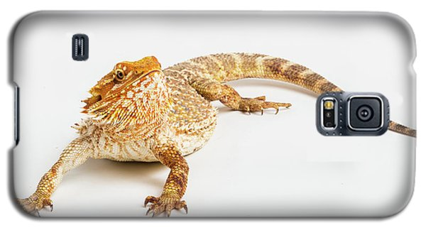 Pogona Isolated Galaxy S5 Case