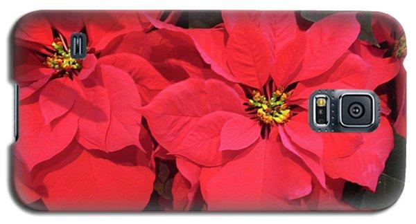Poinsettias Galaxy S5 Case