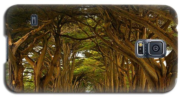 Point Reyes Cypress Tunnel Galaxy S5 Case