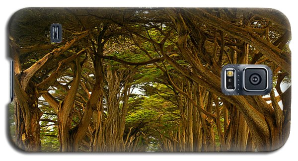 Point Reyes Cypress Tunnel Galaxy S5 Case