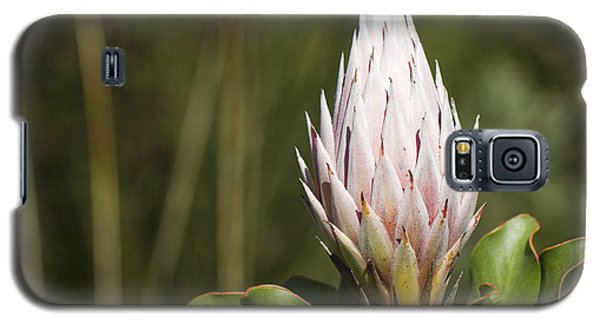 Galaxy S5 Case featuring the photograph Pointing Up by Nathan Rupert