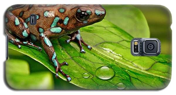 poison art frog Panama Galaxy S5 Case