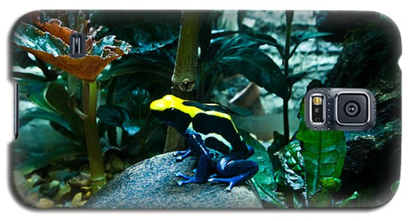 Poison Dart Frog Poised For Leap Galaxy S5 Case